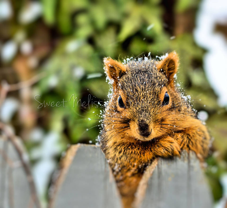 posing-for-peanuts-resize-960-h2o